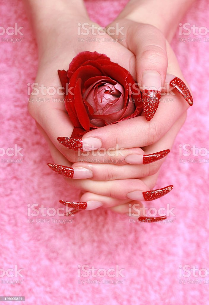Rote rose für weibliche Hände – Foto