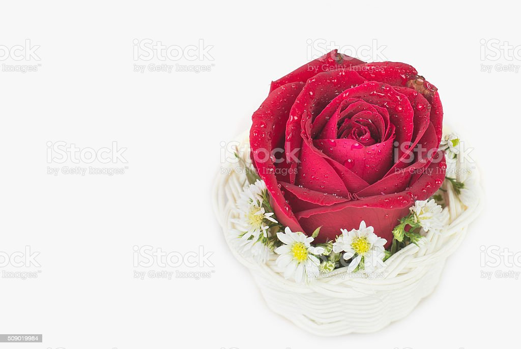 Red rose gift card stock photo