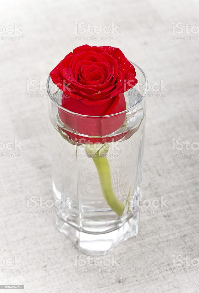 Red Rose in Glass royalty-free stock photo