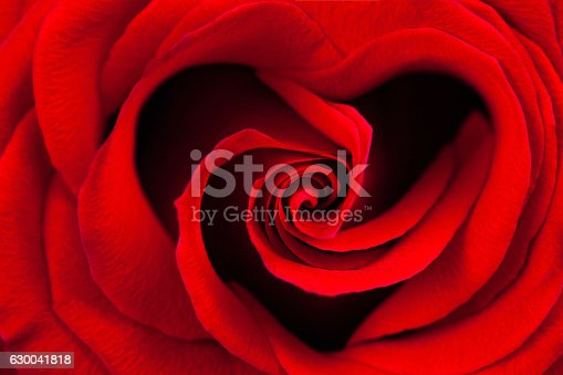 Red rose in the shape of a heart macro as a background