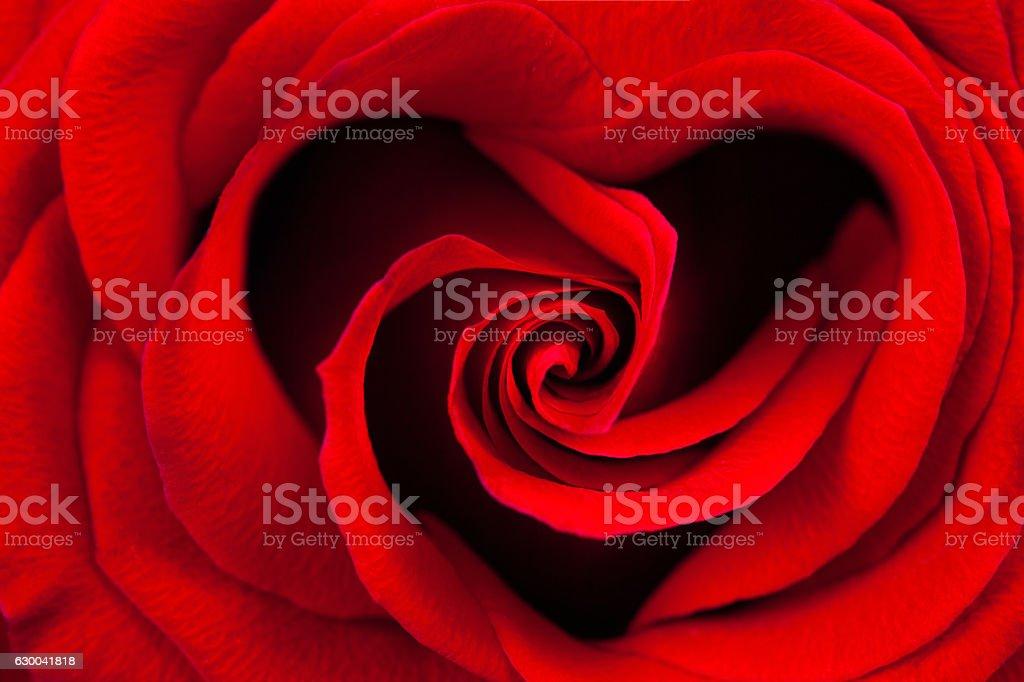 Rosa vermelha em forma de coração - foto de acervo