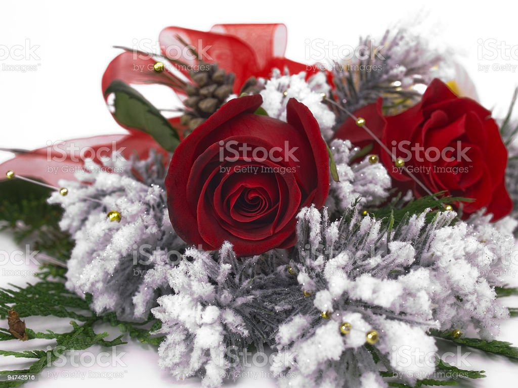 Red Rose in Winter Centered stock photo