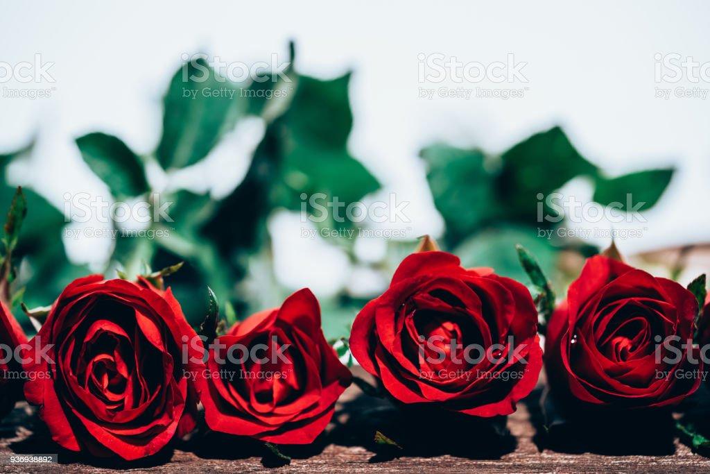Rose Rouge Est Belle Fleur Pour La Signification De Lamour Valentin