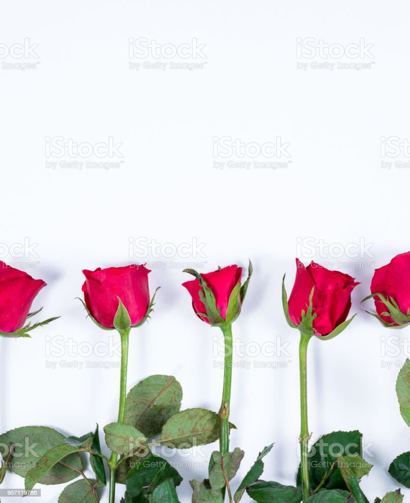 Red Rose Is Beautiful Flower For The Meaning Of Love On Valentines