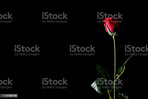 Red rose isolated on a black background picture id1124398760?b=1&k=6&m=1124398760&s=612x612&h=iuf87 tbaaxt1wriatwpqy94tj3dxn0l1bzthkea oi=