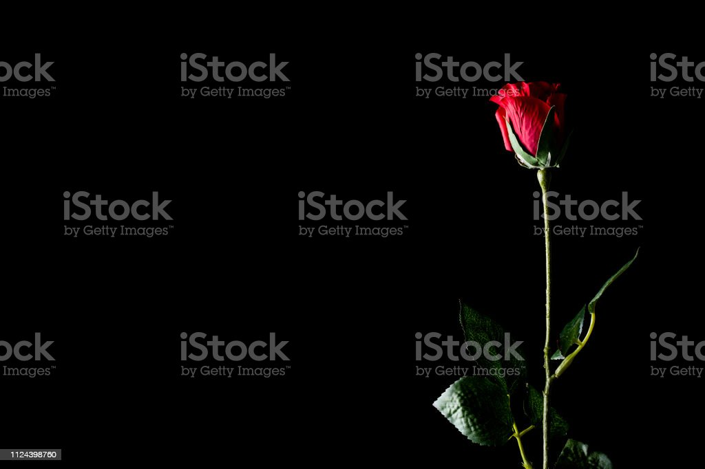 Single Red Rose Black Background Clip Art