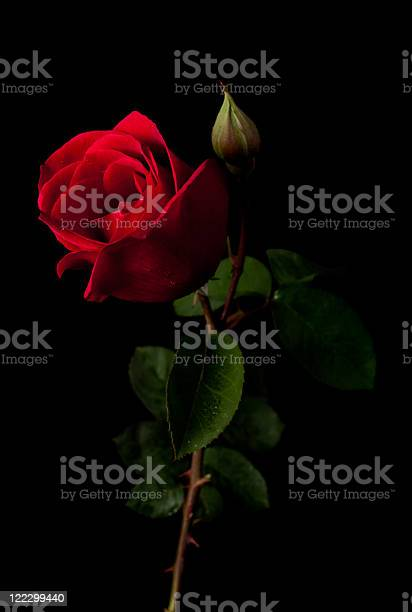 Red rose isolated on a black background picture id122299440?b=1&k=6&m=122299440&s=612x612&h=sdkmw7oplj5jbikvong 9ggxvggmgf3ufz4ly1zjyms=