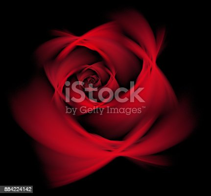 Wine Red Rose isolated on the black background. Close up. Abstract floral pattern Fractal fine art