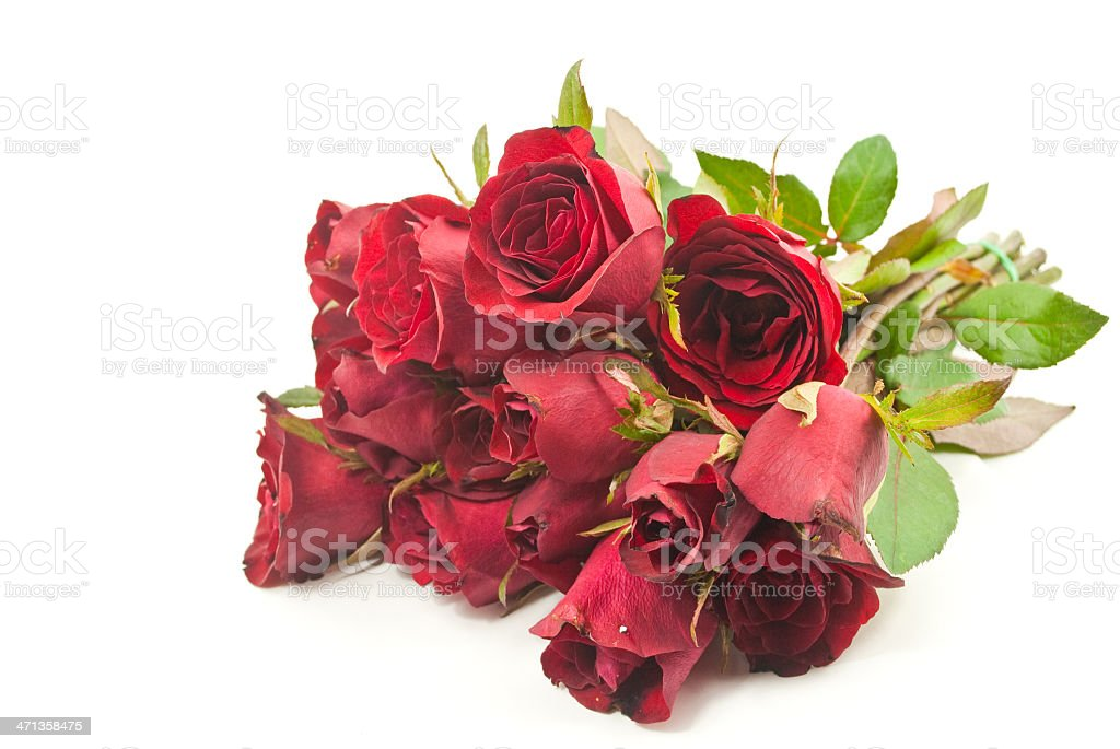 Red rose isolated on the white. royalty-free stock photo