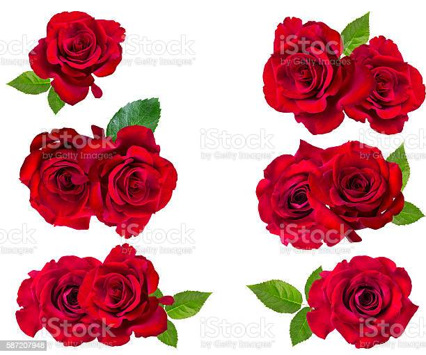 Red rose isolated on the white picture id587207948?b=1&k=6&m=587207948&s=612x612&h=md040tmp3yn7jln m xjisuoogby4fkqvg2n4tyt9my=