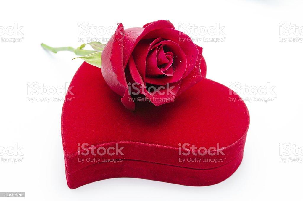 Rosa Rossa Isolato Su Sfondo Bianco Fotografie Stock E Altre