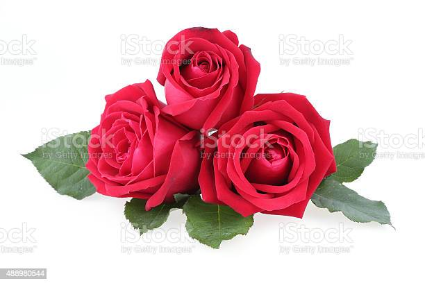 Red rose isolated on white background picture id488980544?b=1&k=6&m=488980544&s=612x612&h=4a61 uu7smmpwzwcyqug0qnajars5ocyo5h3me1mhxg=