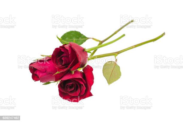 Red rose isolated on white background picture id639247462?b=1&k=6&m=639247462&s=612x612&h=o9dkoif4iesumjged1xlhbbnf0ddseuiqvoelpfsoko=