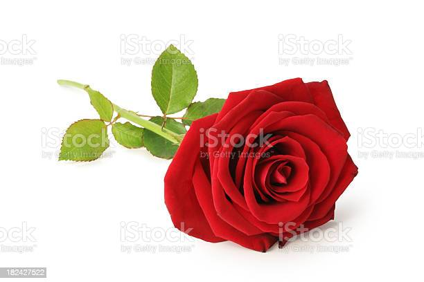 Red rose isolated picture id182427522?b=1&k=6&m=182427522&s=612x612&h=6dgsperpg69 gnuzsb3d bg5zugkln9uowiztndz2bc=