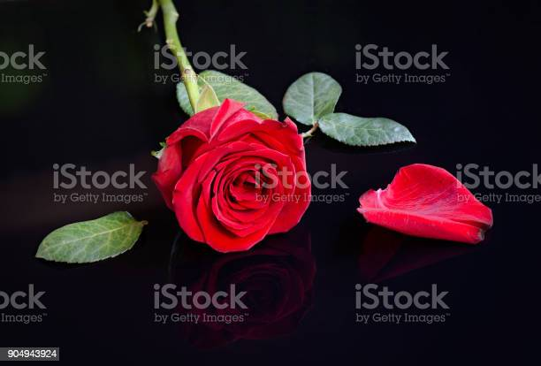 Red rose leaves and petal picture id904943924?b=1&k=6&m=904943924&s=612x612&h=zafktmwwotrnreg wezcrq gy o5cm71eivnuqgtego=