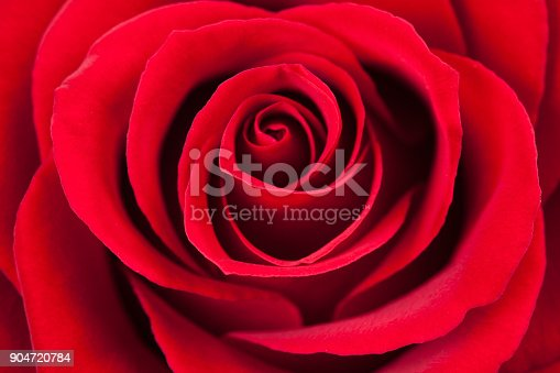 Red rose macro as a background