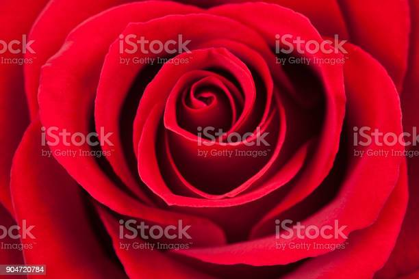 Red rose macro as a background picture id904720784?b=1&k=6&m=904720784&s=612x612&h=du8wndykf d5bmf7t qxy0gbbw3mh6ufnfy r2zoess=