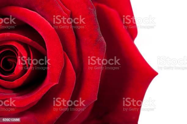 Red rose macro closeup of petals twisted red color picture id639010586?b=1&k=6&m=639010586&s=612x612&h=zgodfbinkom689u lxnqd2 lmnzodur todxt4732xa=