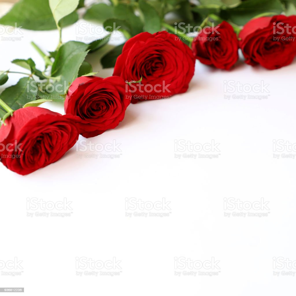 Red Rose Multipurpose Background for Anniversary, Wedding, Birthday or other Celebrations stock photo