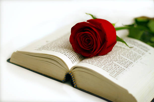 Red rose on a bible stock photo