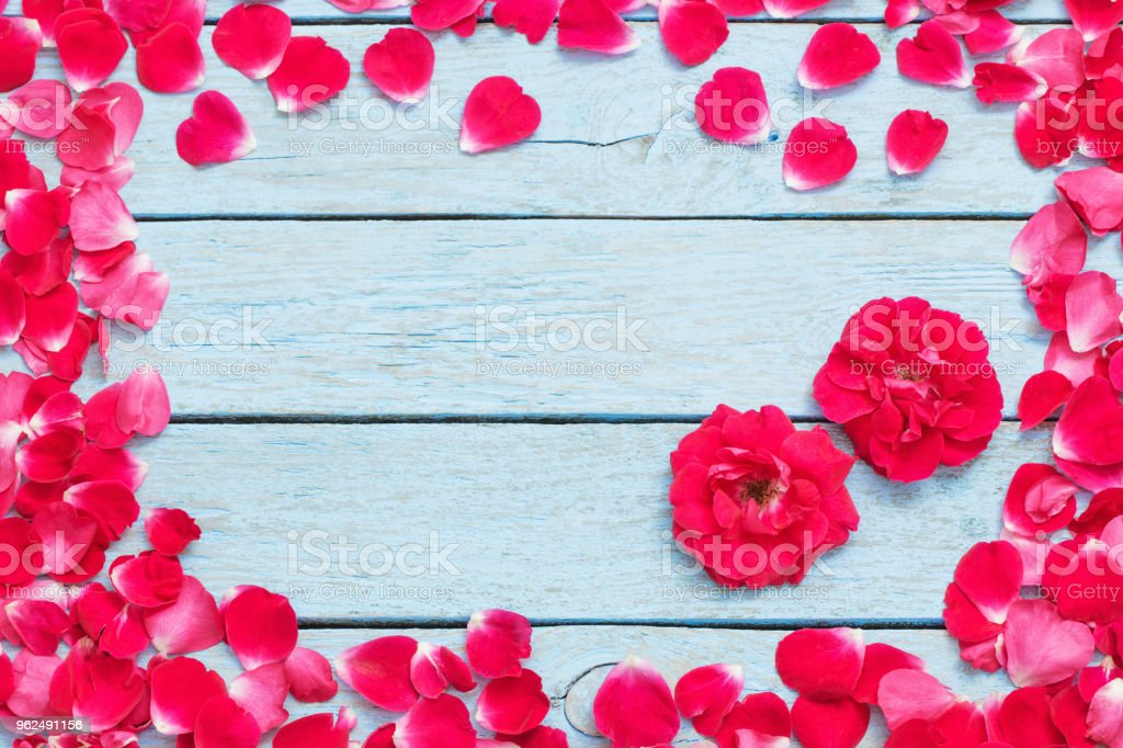 red rose on a blue wooden background - Royalty-free Backgrounds Stock Photo