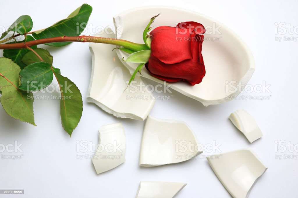 Red Rose on a Broken Bowl stock photo