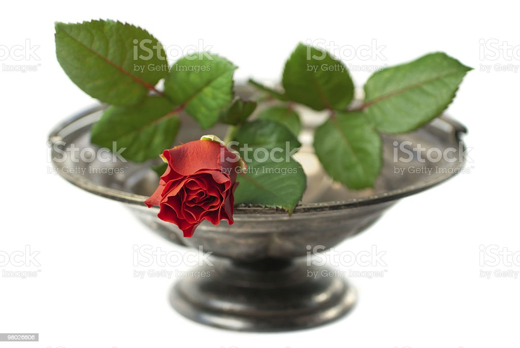Red rose on antique silver bowl isolated royalty-free stock photo