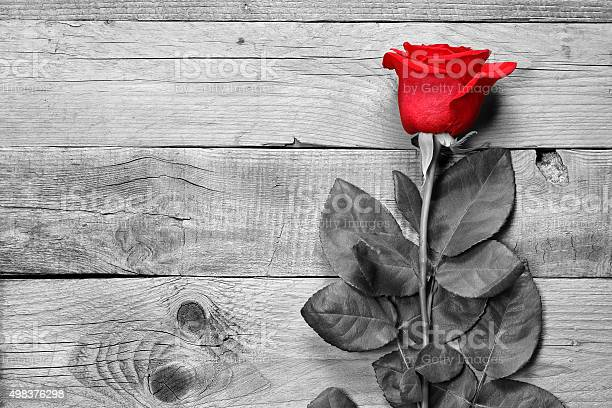 Red rose on black and white background picture id498376298?b=1&k=6&m=498376298&s=612x612&h=v5byuzsl2mh9ip7rey whty7hssq 4egv shid epec=