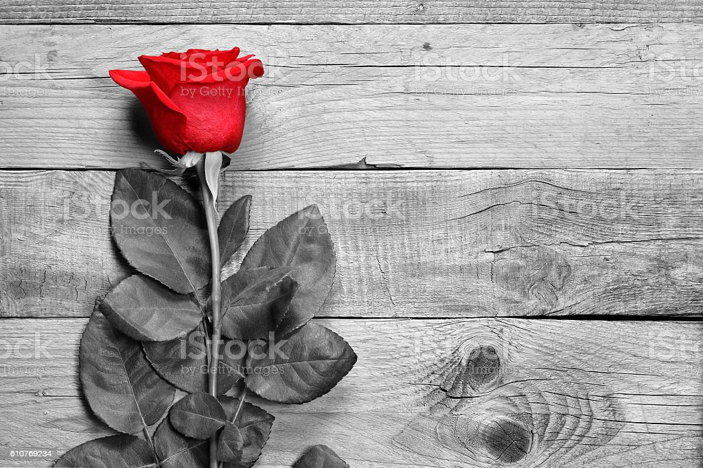 Red rose on black and white wood stock photo