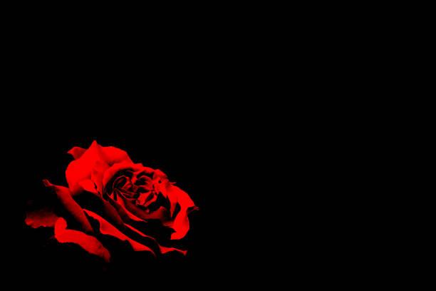 Red rose on black background picture id1069448308?b=1&k=6&m=1069448308&s=612x612&w=0&h=1vu2centa4kkvsd egsfa9s2erzimljnp7lyuhnyo14=