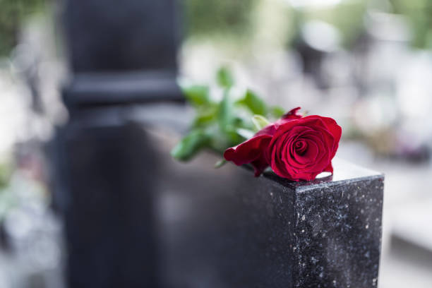 Red rose on grave Rose on tombstone. Red rose on grave. Love - loss. Flower on memorial stone close up. Tragedy and sorrow for the loss of a loved one. Memory. Gravestone with withered rose dead stock pictures, royalty-free photos & images