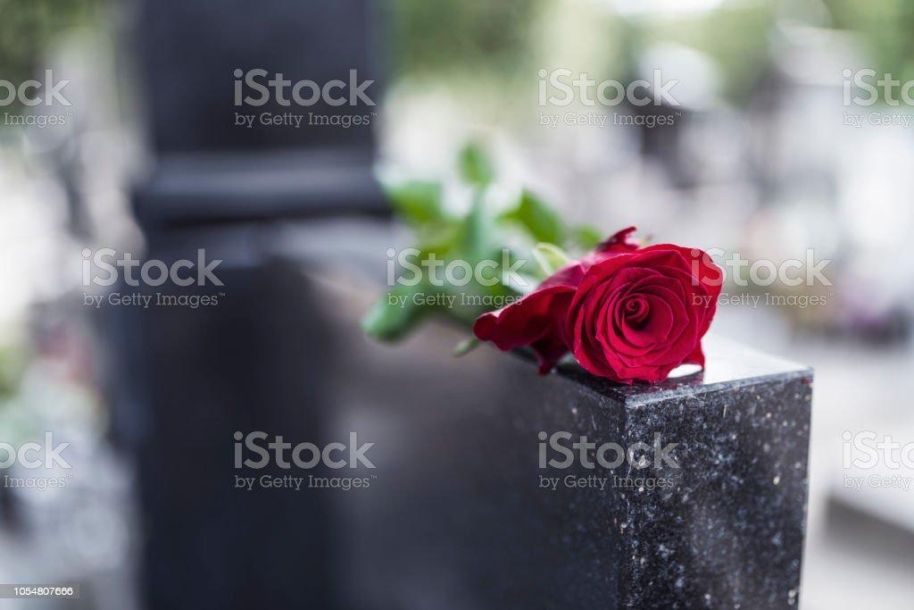 Rosa roja en la tumba - foto de stock