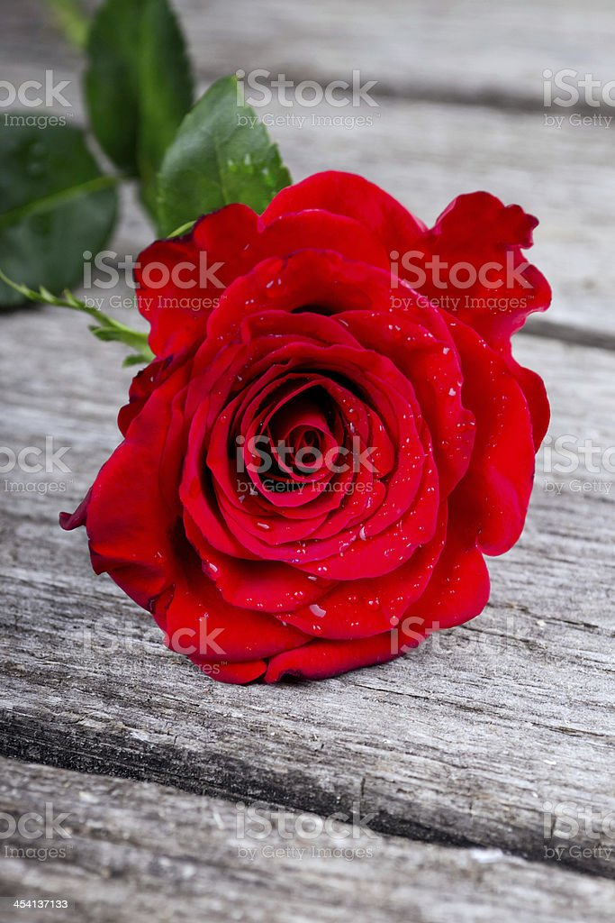 Red Rose on old wooden plank love concept royalty-free stock photo