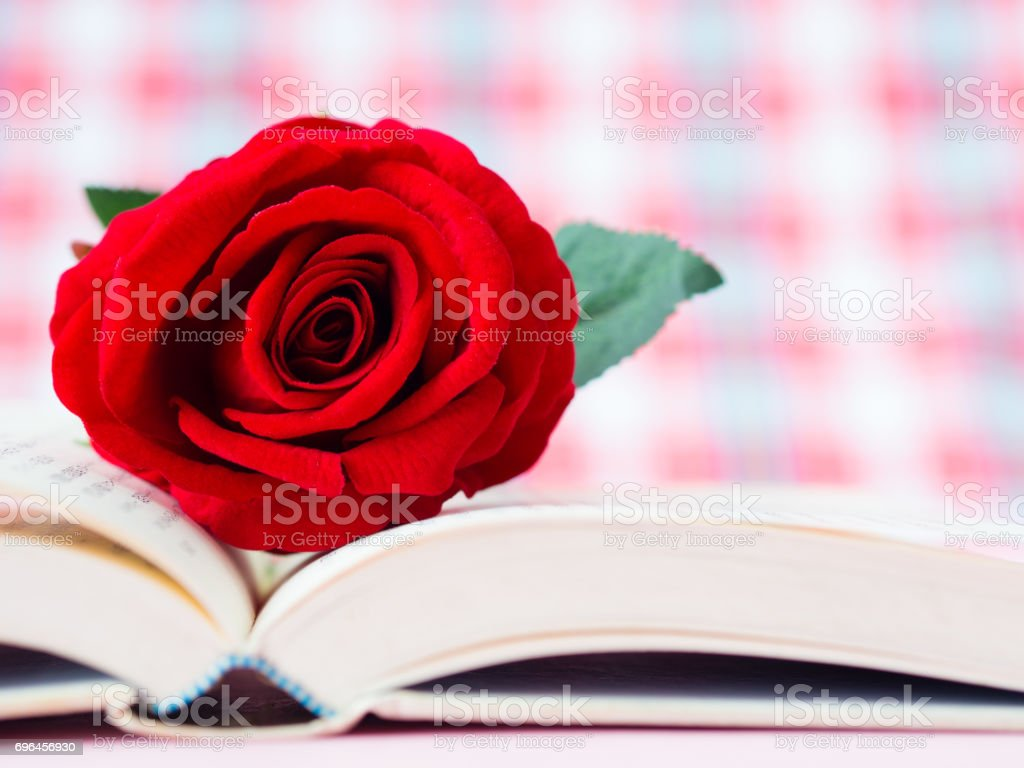 Red rose on open book. LOVE and valentine's day concept. stock photo