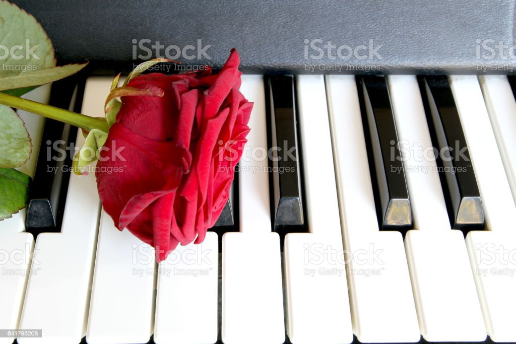 Red Rose On Piano Keyboard Love Song Concept Romantic Music
