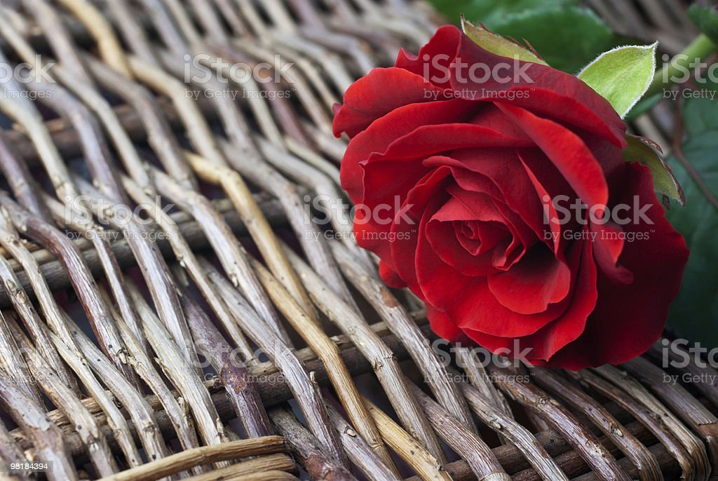 빨간 장미 on 위커 배경기술 (복사 공간 royalty-free 스톡 사진