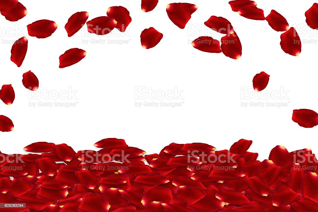 red rose petals are falling from sky stock photo