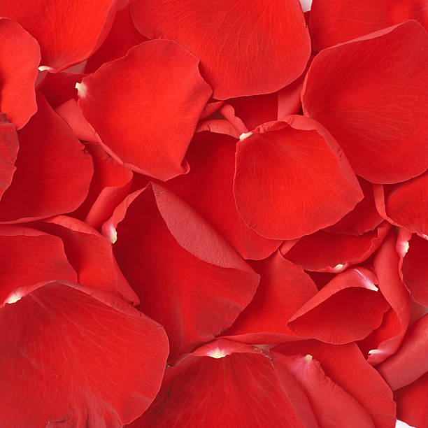 Red rose petals background composition picture id541296118?b=1&k=6&m=541296118&s=612x612&w=0&h=otquyfdqkkcg8m ksunfq2nmpvyzbvdad frub6zk6i=