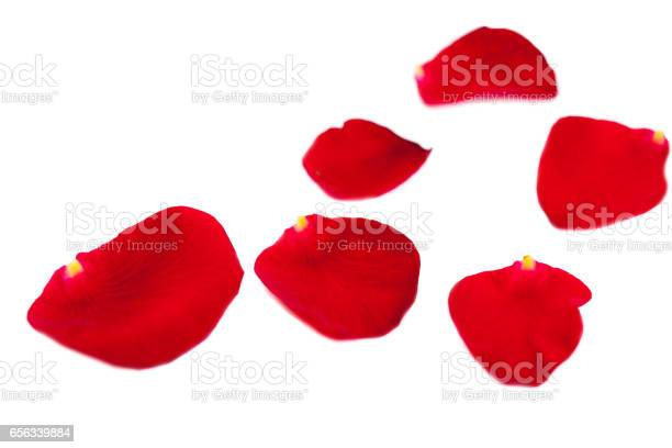 Red rose petals fall isolated on white background valentine or picture id656339884?b=1&k=6&m=656339884&s=612x612&h=s4ridpkyjvfrrowgnk5efgzco005ng 5nltvmqk6rds=