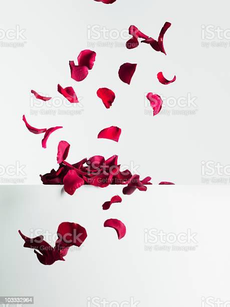 Red rose petals falling picture id103332964?b=1&k=6&m=103332964&s=612x612&h=vr7sp  kcr6lkbffvgjm6tqzv37c r3 9hz8i4dp6ma=