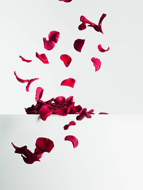 Red rose petals falling stock photo