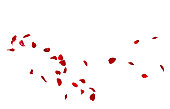 istock Red rose petals fly in a circle. The center free space for Your photos or text 928783272