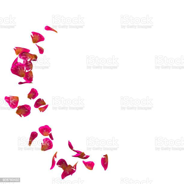 Red rose petals fly in a circle the center free space for your photos picture id928783432?b=1&k=6&m=928783432&s=612x612&h=33ito nuqn8zhotu6gadiyqslwrfq0tmscocemdlgqi=
