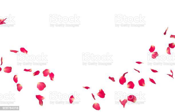 Red rose petals fly in a circle the center free space for your photos picture id928784016?b=1&k=6&m=928784016&s=612x612&h=nho6imzc9suu8zpph2wztuyrx4x6sfi q3abawirv04=