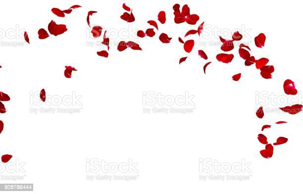 Red rose petals fly in a circle the center free space for your photos picture id928786444?b=1&k=6&m=928786444&s=612x612&h=0hx9u8e fwa zprshysfvcnyv4hudxfwohtj0sk1kai=