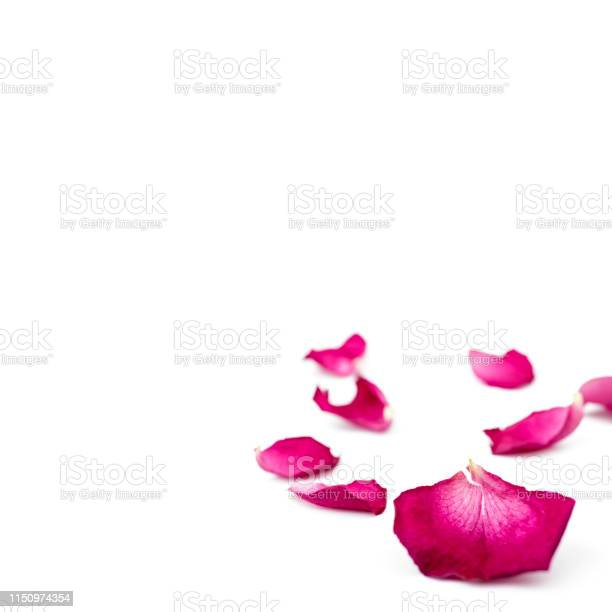 Red rose petals isolated on white background macro picture id1150974354?b=1&k=6&m=1150974354&s=612x612&h=0qc9c4wrxg0g exx hvdajmcef4oaclc7xdgb0 cibw=