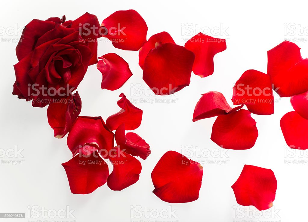 Red rose petals isolated on white background royalty-free stock photo