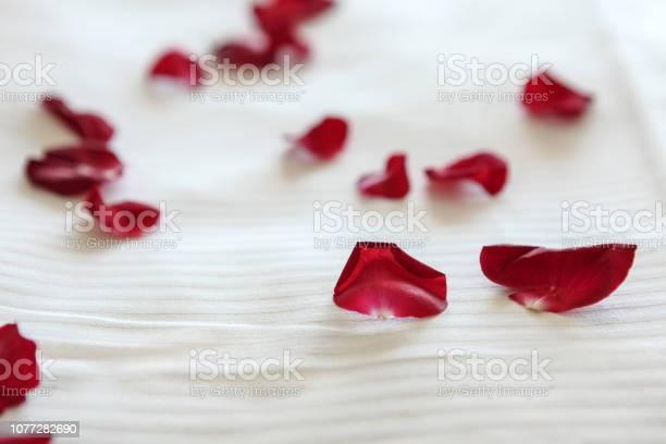 Red rose petals on white bed picture id1077282690?b=1&k=6&m=1077282690&s=612x612&h=ihdgzahsu 3yjaeg89t0fj9dhbnupaup1enava0 s70=