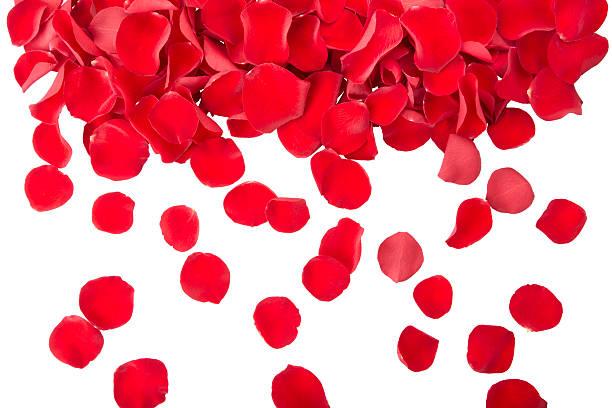 Red rose petals picture id119962951?b=1&k=6&m=119962951&s=612x612&w=0&h=zqxulxxghjxndq6zsqsls78ngkjrsjouhsakwdifci4=