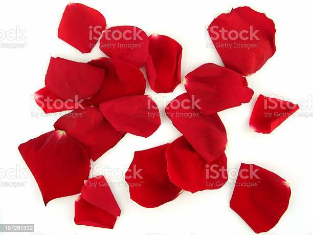 Red rose petals picture id157281312?b=1&k=6&m=157281312&s=612x612&h=ngbkbwebfwc2f71v 01klt  eabxj8qdx2d0c4yopyo=